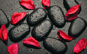 Rose Petals, drops, Black, red, stones