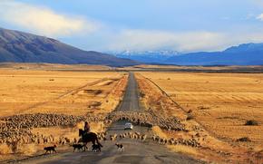 machine, chili, Patagonia, road, Sheep