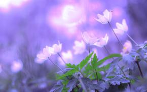 боке, цветы, листья