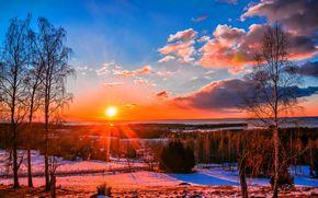 冬天, 日落, 树, 景观