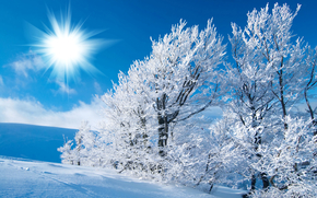 雪, 霜, 霜, 冬天, 痕迹, 太阳, 场, 天空, 光, 树