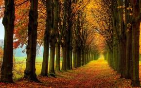natura, alberi, stradale, fogliame, foresta, campo, autunno