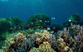 Coralli, mare, mondo subacqueo.
