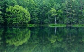 отражение, озеро, деревья, лес
