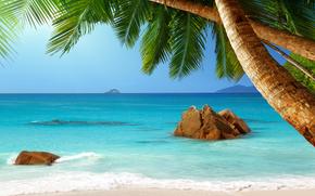 tropical, Paradise, beach, palms, sea, ocean, sunshine, summer, Vacation, beach, sea, Palms, tropics, sand, shore