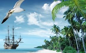 tropicale, Paradise, spiaggia, palme, mare, oceano, estate, Vacanza, spiaggia, mare, Palme, tropici, sabbia, puntellare, spedire, isola