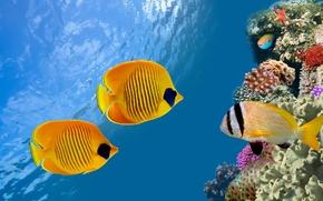tropical, reef, underwater, fishes, ocean
