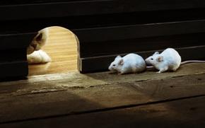 COTE, mouse, gatto