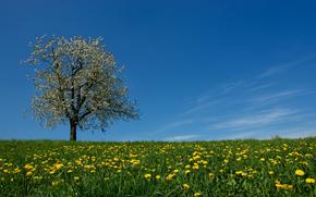 Одуванчики распустились  Весна