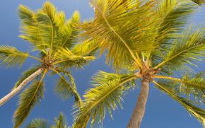 棕榈, 天空, 夏天, 叶子, 青菜