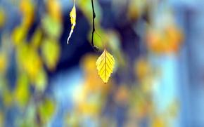 листья, листочки, желтые, ветка, фон, деревья