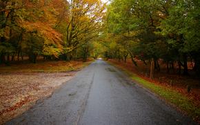 stradale, Foresta in Hampshire, Inghilterra, autunno