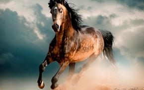 cavallo, mustang, deserto, galoppo, jumper, cavallo