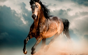 Лошадь, мустанг, пустыня, галоп, скакун, конь