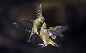 птицы, полёт