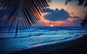 Барбадос, карибское море, вечер, пляж, закат, солнце, пальмы, лист, силуэт