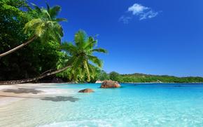 sun, Palms, shore, beach, sky, sea, tropics, sand, ocean