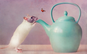 чайник, мышь, жажда