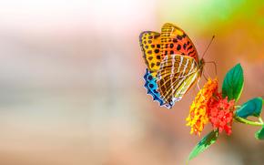 Ƹ̵̡Ӝ̵̨̄Ʒ, butterfly, bright, flower