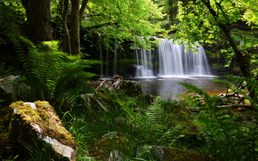 Inghilterra, cascata, foresta, felce