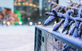 自然, フェンス, モミの木, 雪, ぼけ味, フェンス, トウヒ, ライト, ブランチ, 冬