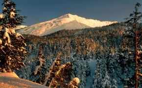 nevicata, foresta, paesaggio, parco, inverno, alberi, Montagne
