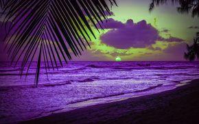 пляж, пальмы, карибское море, силуэт, лист, закат, вечер, Барбадос, солнце