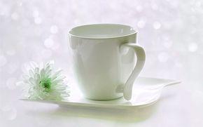 花, 杯, 菊花, 茶托, 强光