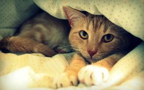 letto, riposo, COTE, coperta, Red