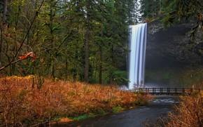 森林, 瀑布, 河, 桥, 树, 景观