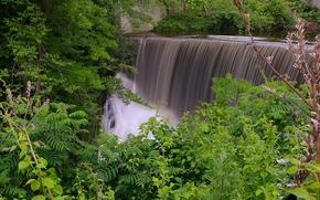cascata, alberi, natura