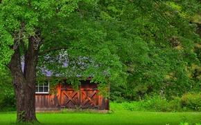 поляна, деревья, домик, пейзаж