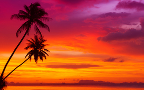 ocean, tropical beach, beautiful red sky, landscape, palms, clouds, Sunsets, nature