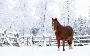 конь, снег, природа