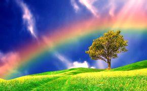 поле, радуга, дерево