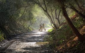 bosque, burro, carretera, Carro, después de la lluvia