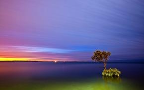 coucher du soleil, lac, arbre solitaire