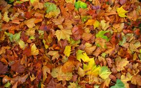 autunno, fogliame, natura
