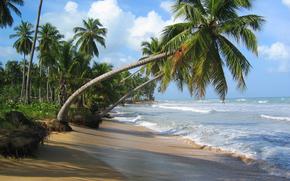 oceano, navigare, tropici, sabbia, spiaggia, cielo, nuvole, palma, mare