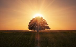 landscape, grass field, nature, beautiful scene, lonely tree, magical sunrise