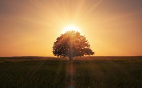 paysage, champ d'herbe, nature, belle scène, arbre solitaire, lever de soleil magique