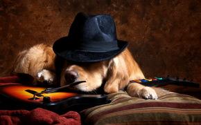 cappello, amico, chitarra, cane