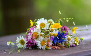 Chamomile, cornflowers, unpretentious, not picky, Wildflowers