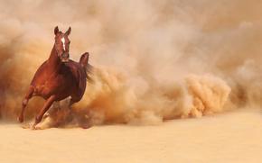 пыль, лошадь, бег, бежит, песок, конь
