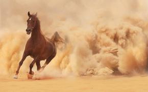 бег, бежит, лошадь, песок, пыль, конь