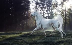 koń, 3d, sztuka