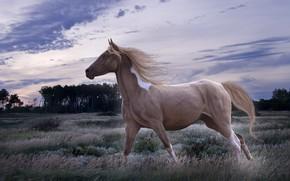лошадь, конь, животное