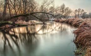 mattinata, nevicata, gelo, alberi, fiume