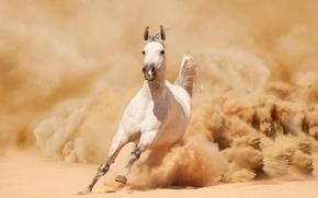 песок, пыль, лошадь, бег, бежит, конь