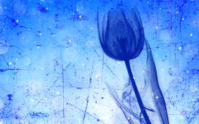 郁金香, 花, 秆, 触摸
